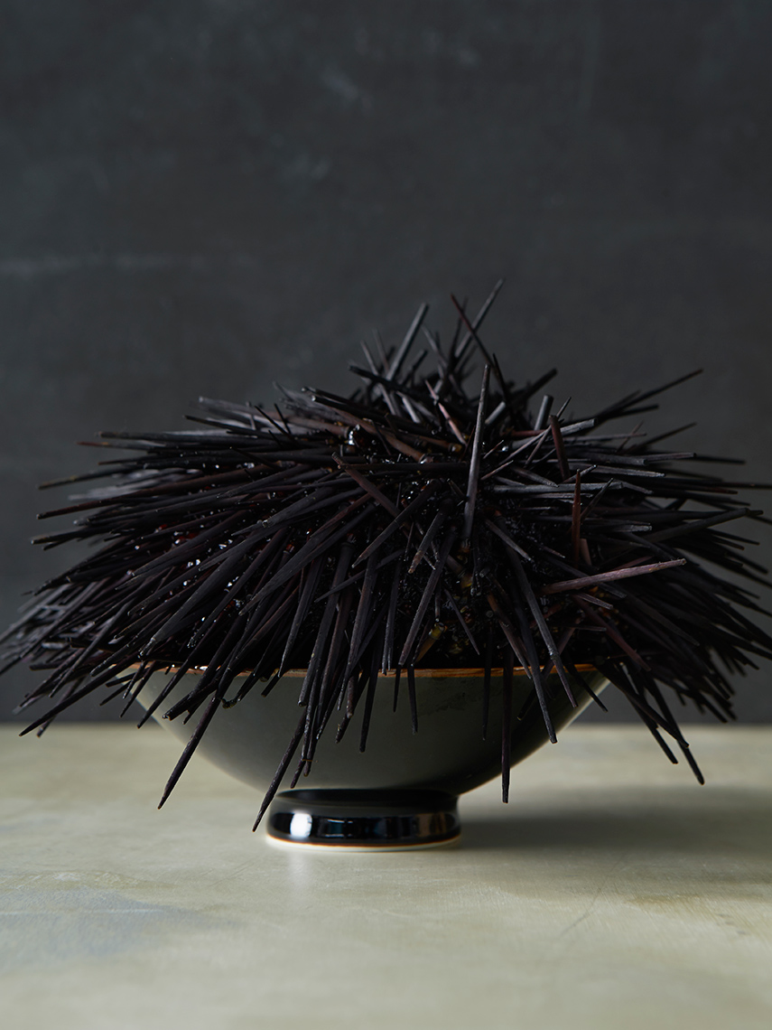 Sea_Urchin_Main_01_final_for_web
